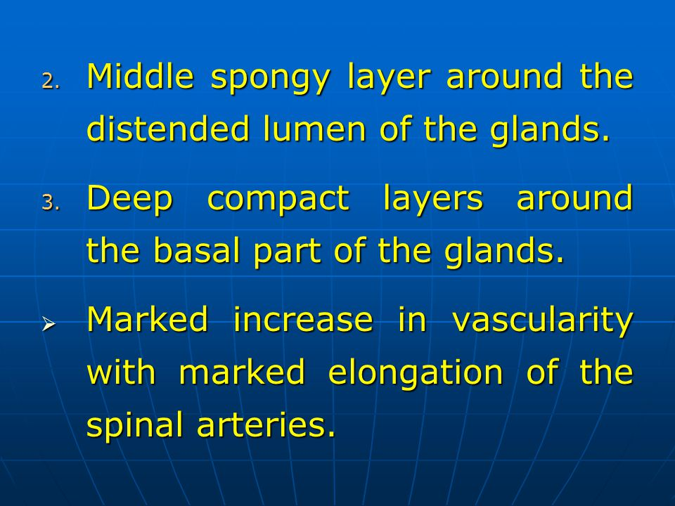 Middle spongy layer around the distended lumen of the glands.