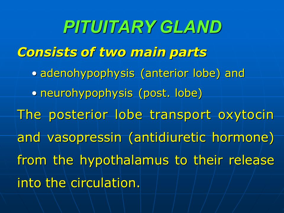 PITUITARY GLAND Consists of two main parts