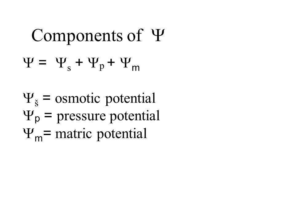 Components of Y Y = Ys + Yp + Ym Yš = osmotic potential