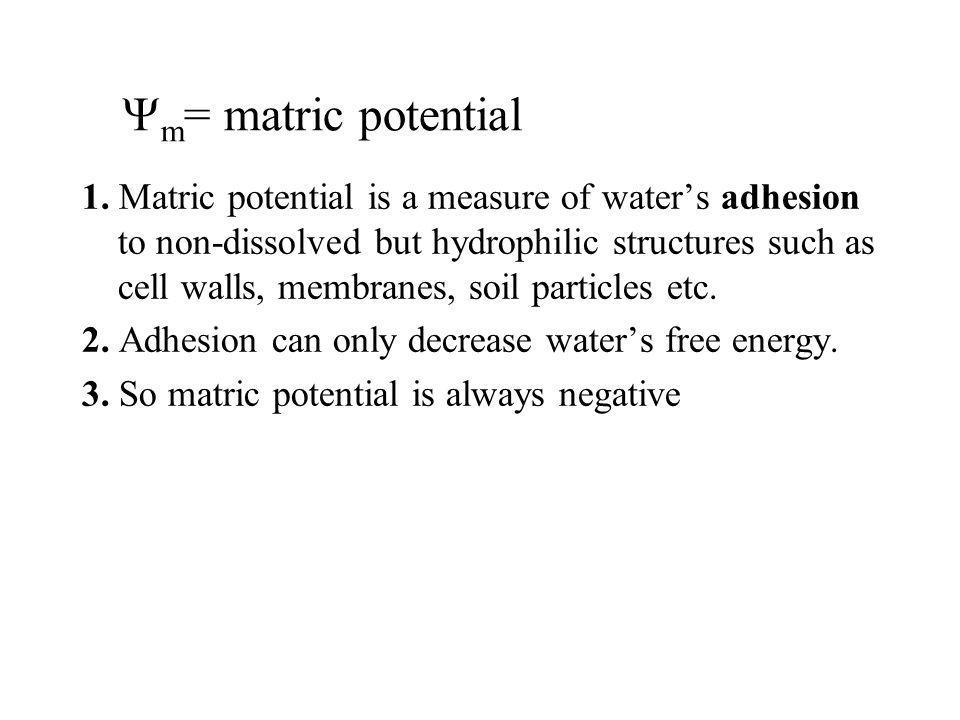 Ym= matric potential