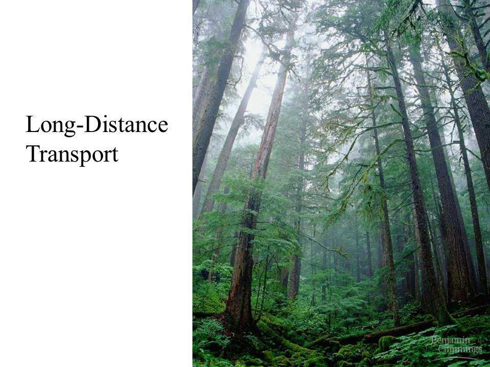 Long-Distance Transport