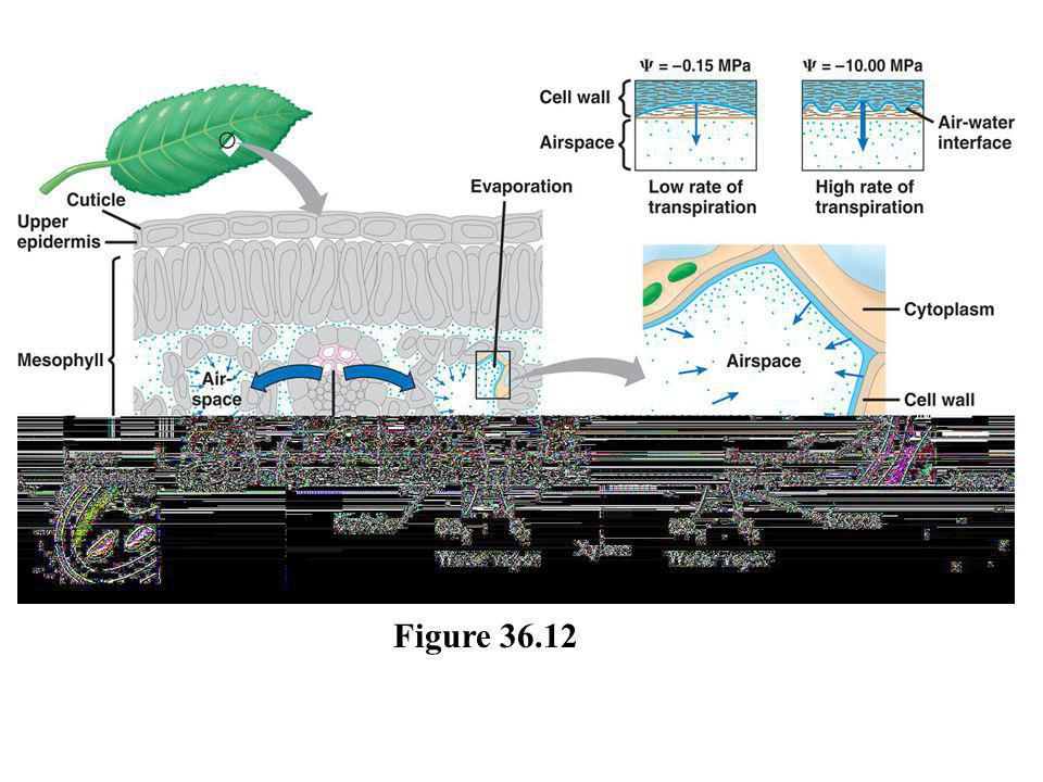Figure 36.12