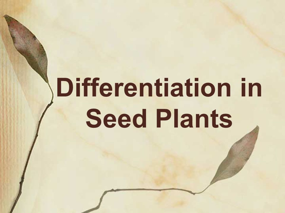 Differentiation in Seed Plants