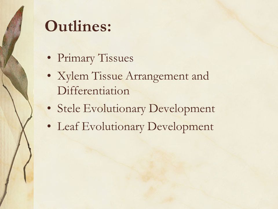 Outlines: Primary Tissues Xylem Tissue Arrangement and Differentiation