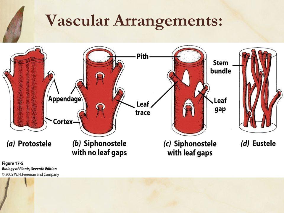 Vascular Arrangements: