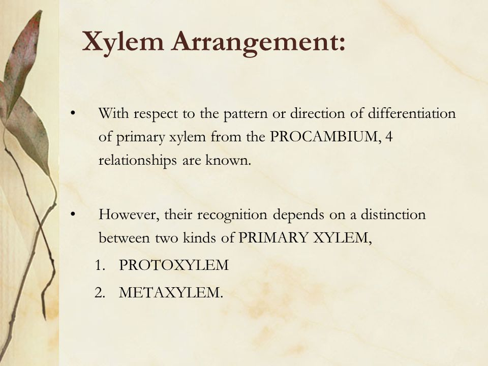 Xylem Arrangement: With respect to the pattern or direction of differentiation of primary xylem from the PROCAMBIUM, 4 relationships are known.