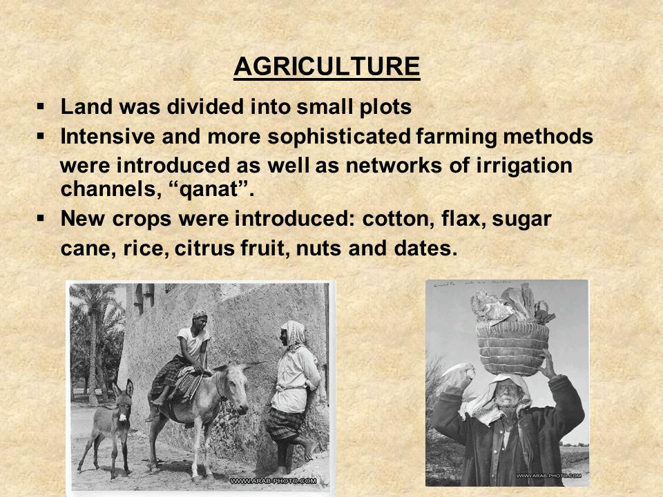 AGRICULTURE Land was divided into small plots. Intensive and more sophisticated farming methods.