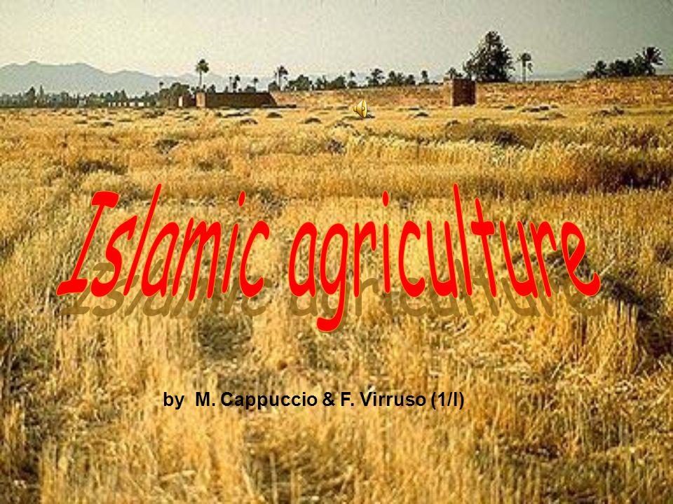 Islamic agriculture by M. Cappuccio & F. Virruso (1/I)