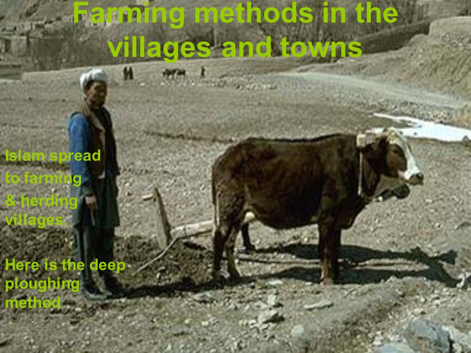 Farming methods in the villages and towns