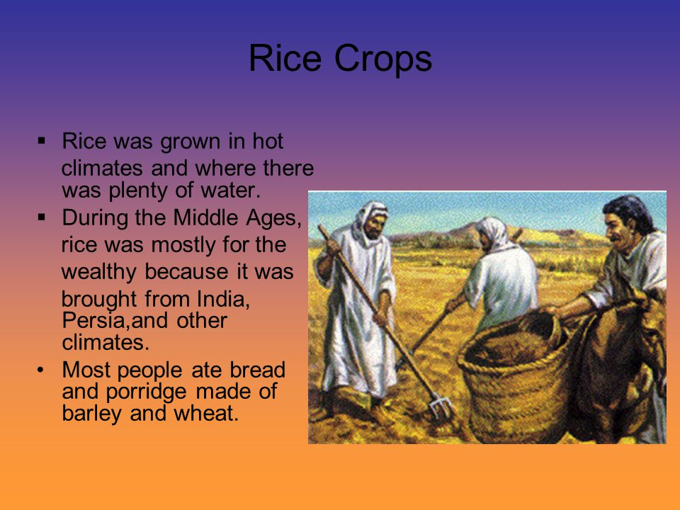 Rice Crops Rice was grown in hot
