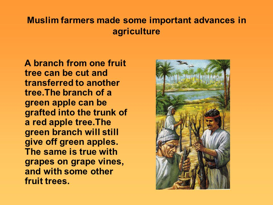 Muslim farmers made some important advances in agriculture