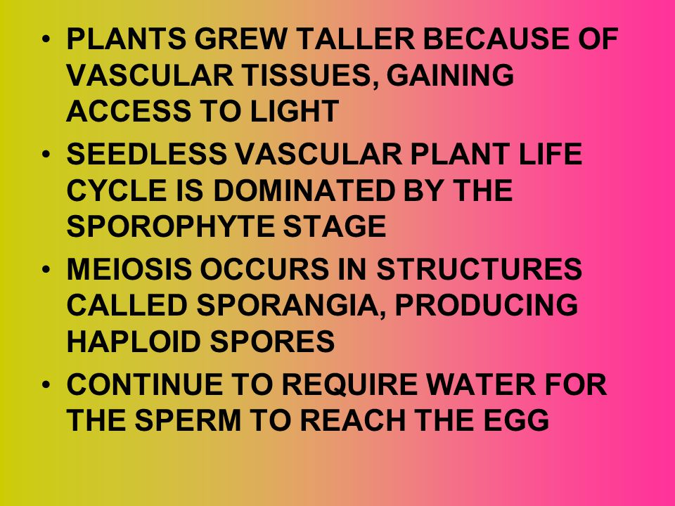 PLANTS GREW TALLER BECAUSE OF VASCULAR TISSUES, GAINING ACCESS TO LIGHT