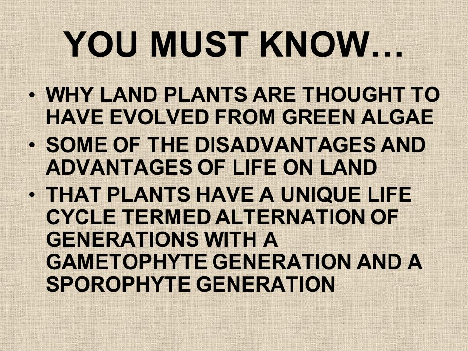 YOU MUST KNOW… WHY LAND PLANTS ARE THOUGHT TO HAVE EVOLVED FROM GREEN ALGAE. SOME OF THE DISADVANTAGES AND ADVANTAGES OF LIFE ON LAND.