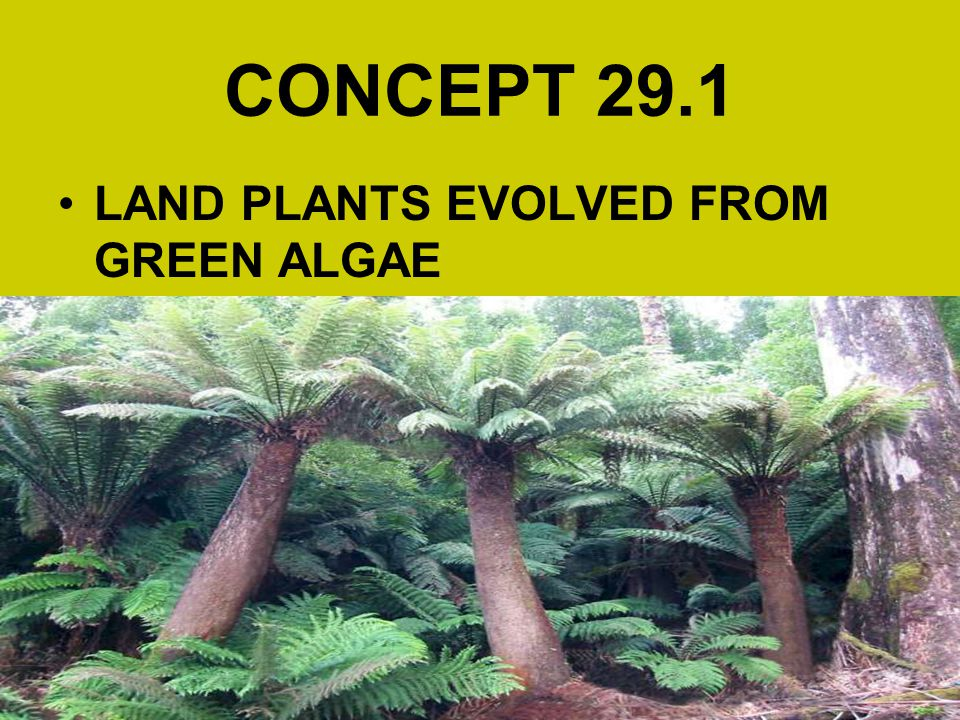 CONCEPT 29.1 LAND PLANTS EVOLVED FROM GREEN ALGAE