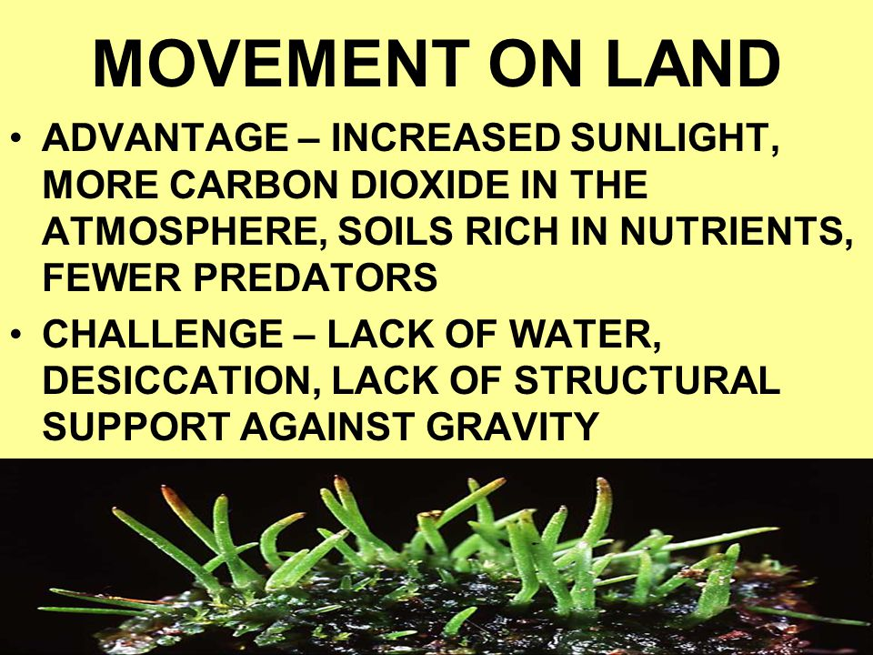 MOVEMENT ON LAND ADVANTAGE – INCREASED SUNLIGHT, MORE CARBON DIOXIDE IN THE ATMOSPHERE, SOILS RICH IN NUTRIENTS, FEWER PREDATORS.