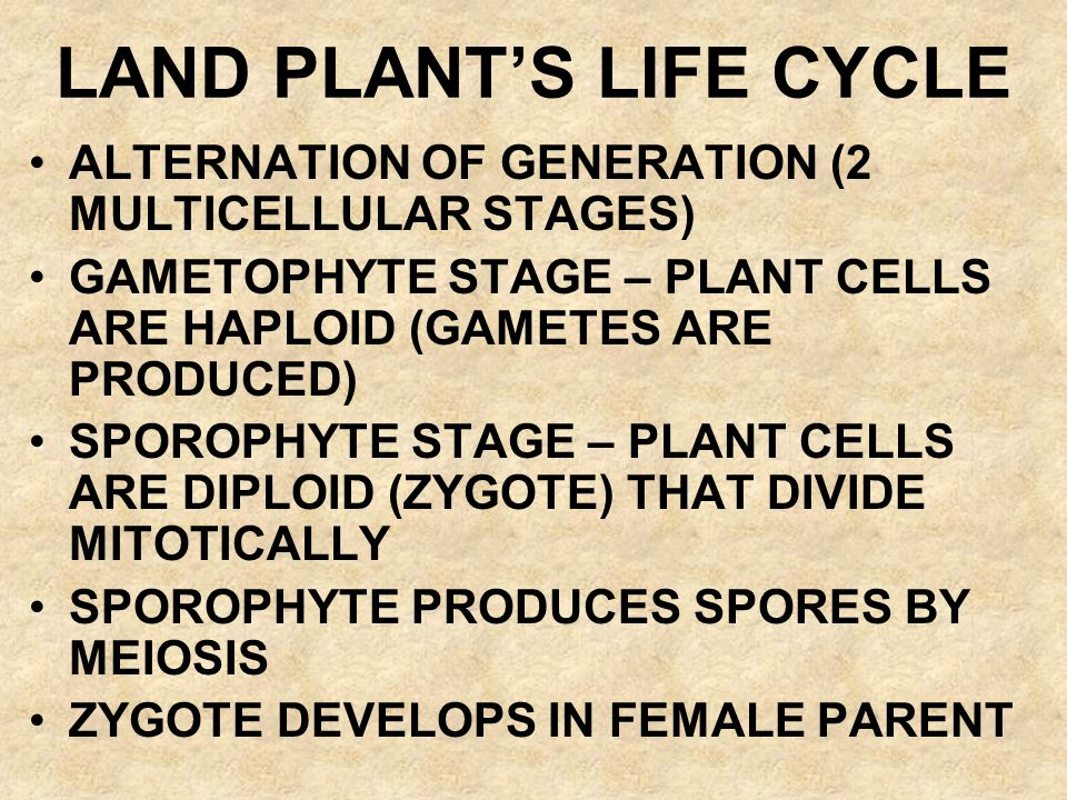 LAND PLANT'S LIFE CYCLE