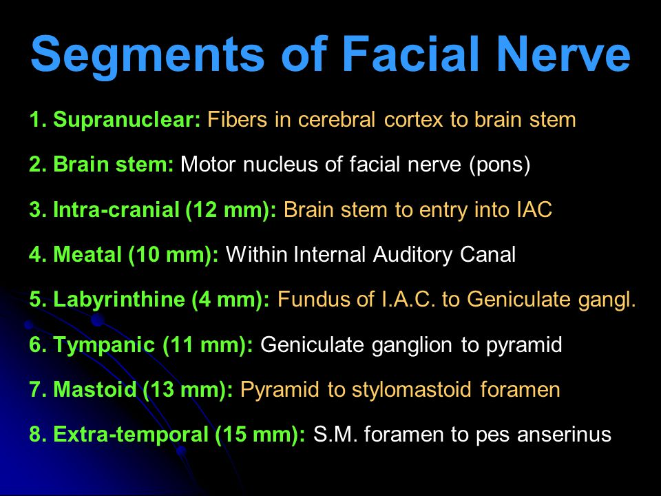 Segments of Facial Nerve