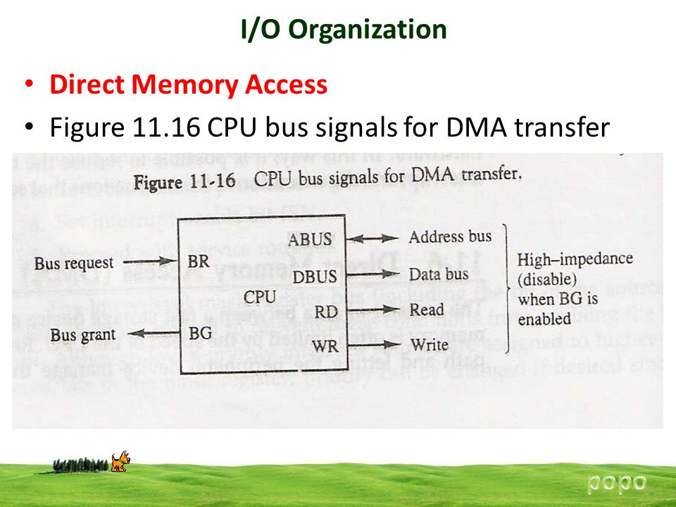 Figure 11.16 CPU bus signals for DMA transfer