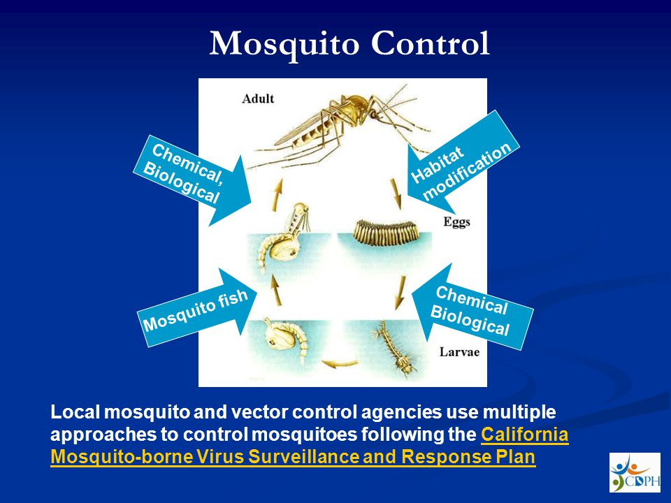 Mosquito Control Habitat modification. Chemical, Biological. Chemical Biological. Mosquito fish.