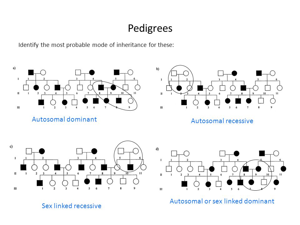 Pedigrees Autosomal dominant Autosomal recessive