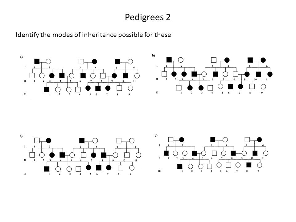 Pedigrees 2 Identify the modes of inheritance possible for these
