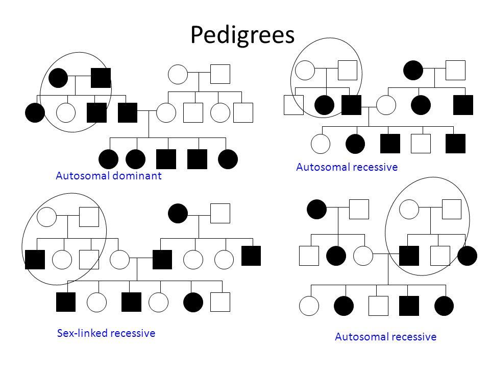 Pedigrees Autosomal recessive Autosomal dominant Sex-linked recessive