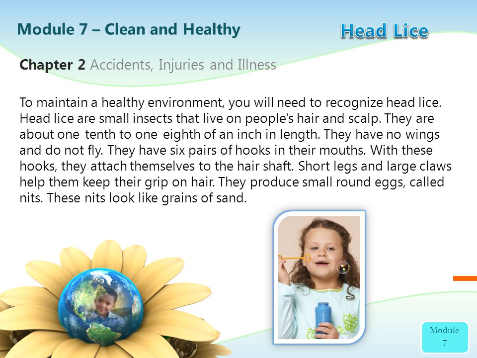 Head Lice Module 7 – Clean and Healthy