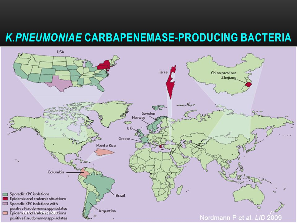 K.pneumoniae carbapenemase-producing bacteria