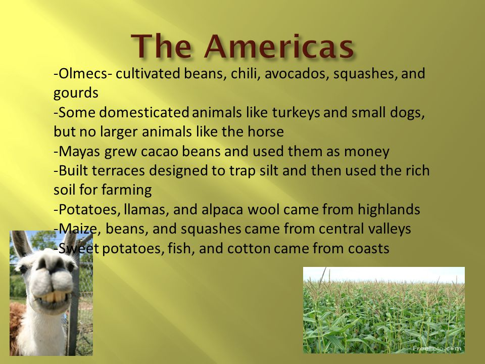 The Americas -Olmecs- cultivated beans, chili, avocados, squashes, and gourds.