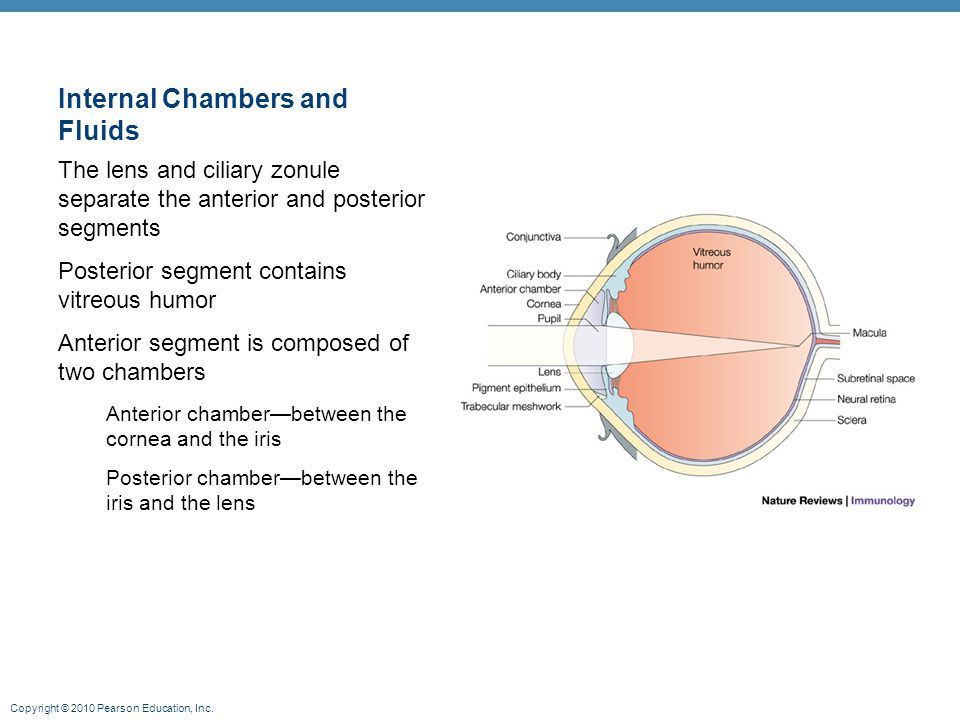 Internal Chambers and Fluids
