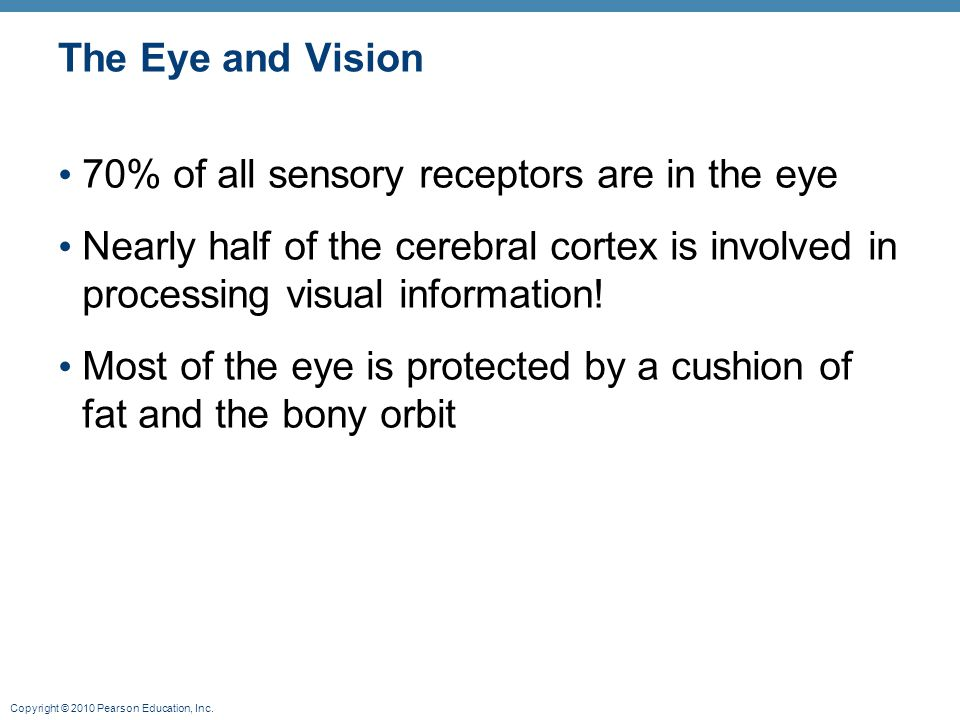 The Eye and Vision 70% of all sensory receptors are in the eye. Nearly half of the cerebral cortex is involved in processing visual information!
