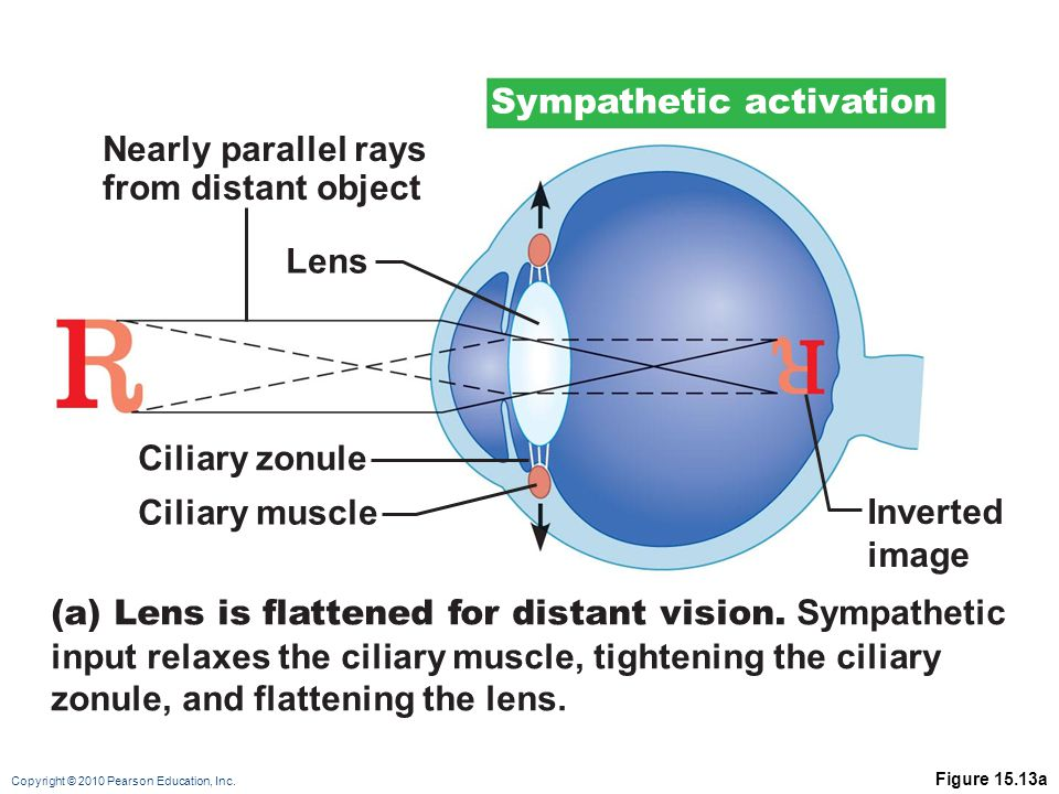 Sympathetic activation Nearly parallel rays from distant object