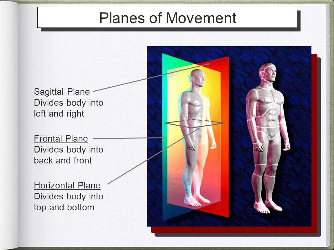 Planes of Movement Sagittal Plane Divides body into left and right