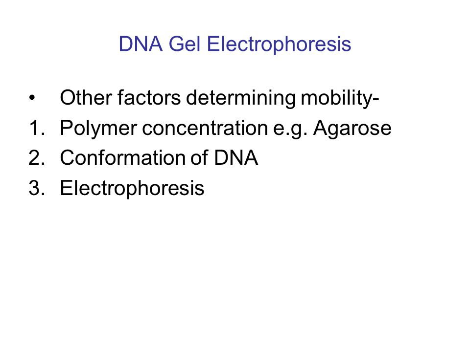 DNA Gel Electrophoresis