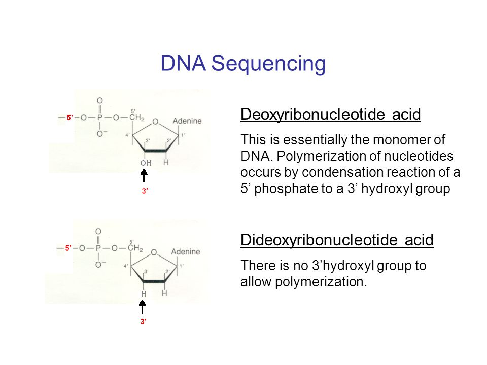 DNA Sequencing Deoxyribonucleotide acid Dideoxyribonucleotide acid