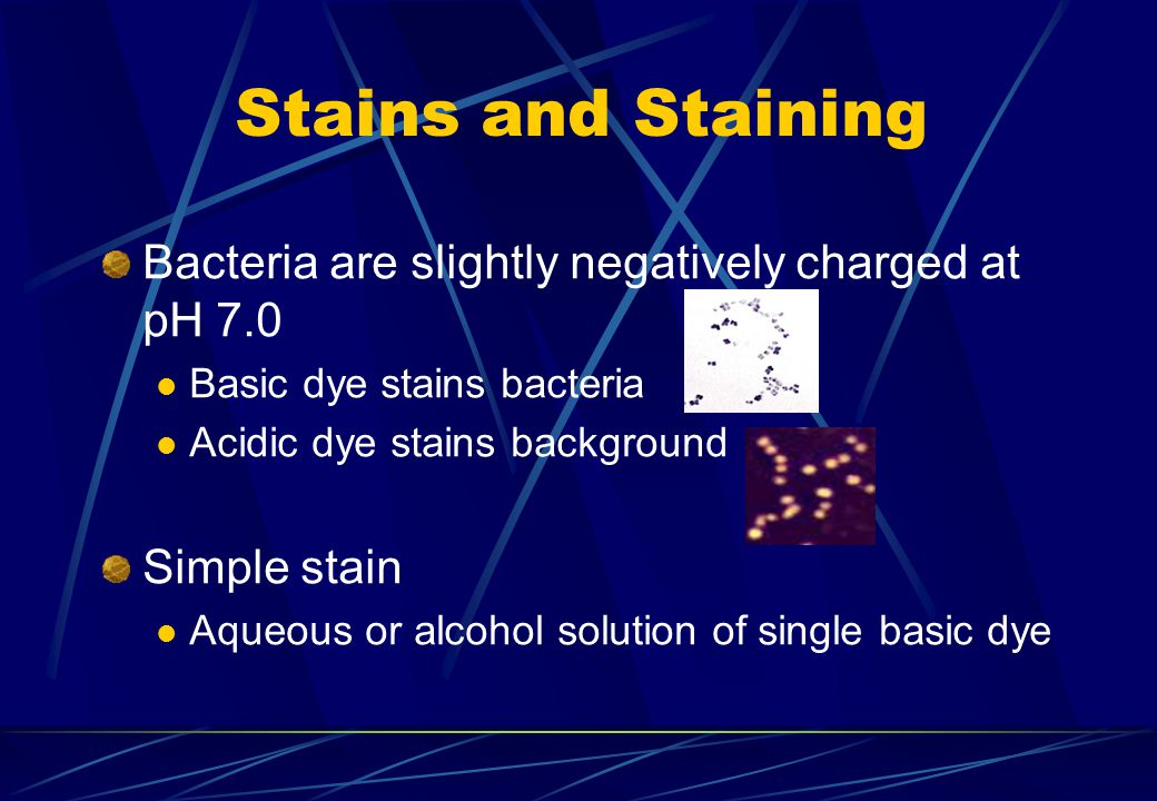 Stains and Staining Bacteria are slightly negatively charged at pH 7.0