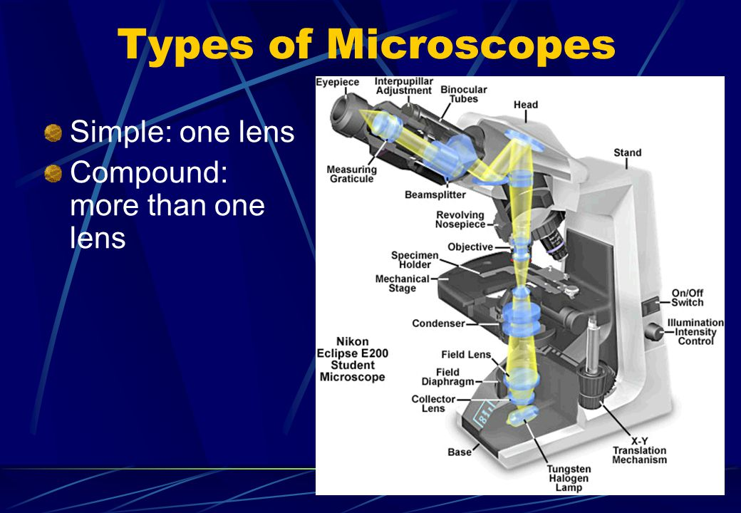 Types of Microscopes Simple: one lens Compound: more than one lens