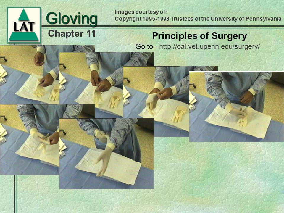 Gloving Principles of Surgery