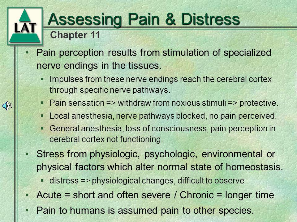 Assessing Pain & Distress