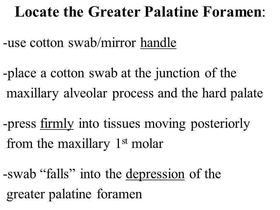 Locate the Greater Palatine Foramen: