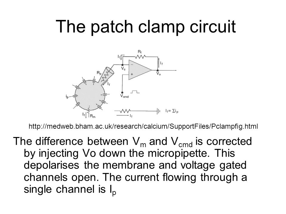 The patch clamp circuit