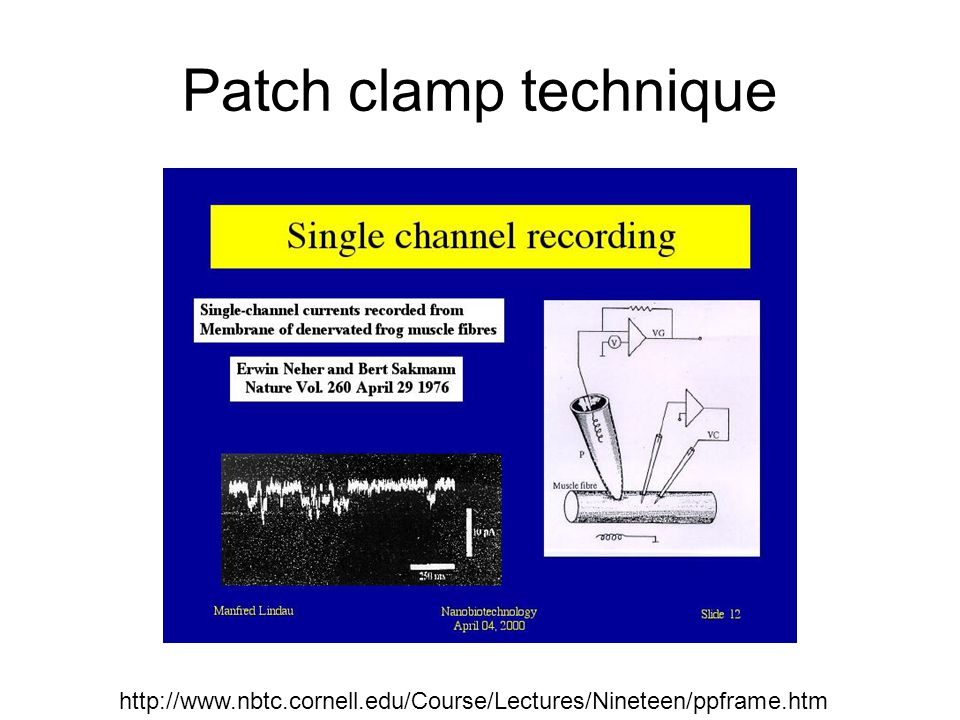 Patch clamp technique http://www.nbtc.cornell.edu/Course/Lectures/Nineteen/ppframe.htm