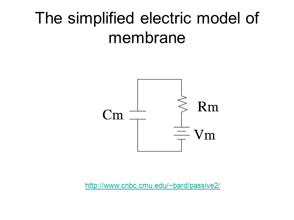 The simplified electric model of membrane
