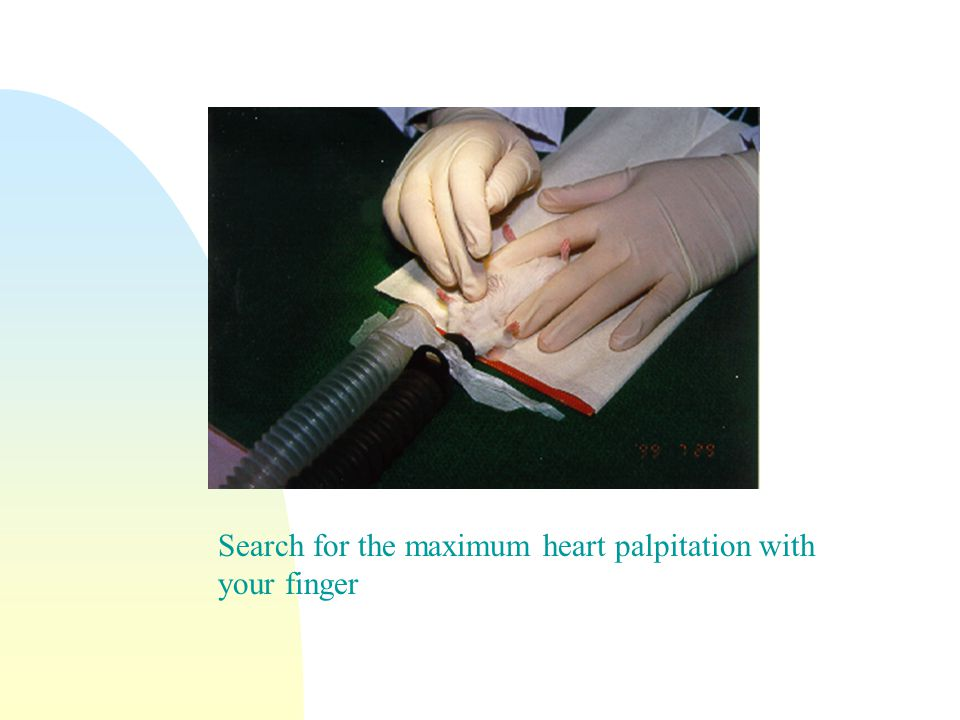 Search for the maximum heart palpitation with your finger