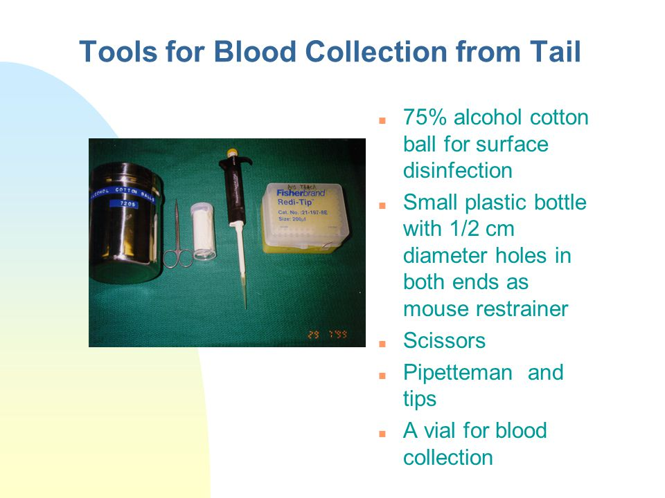 Tools for Blood Collection from Tail