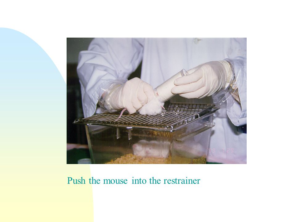 Push the mouse into the restrainer