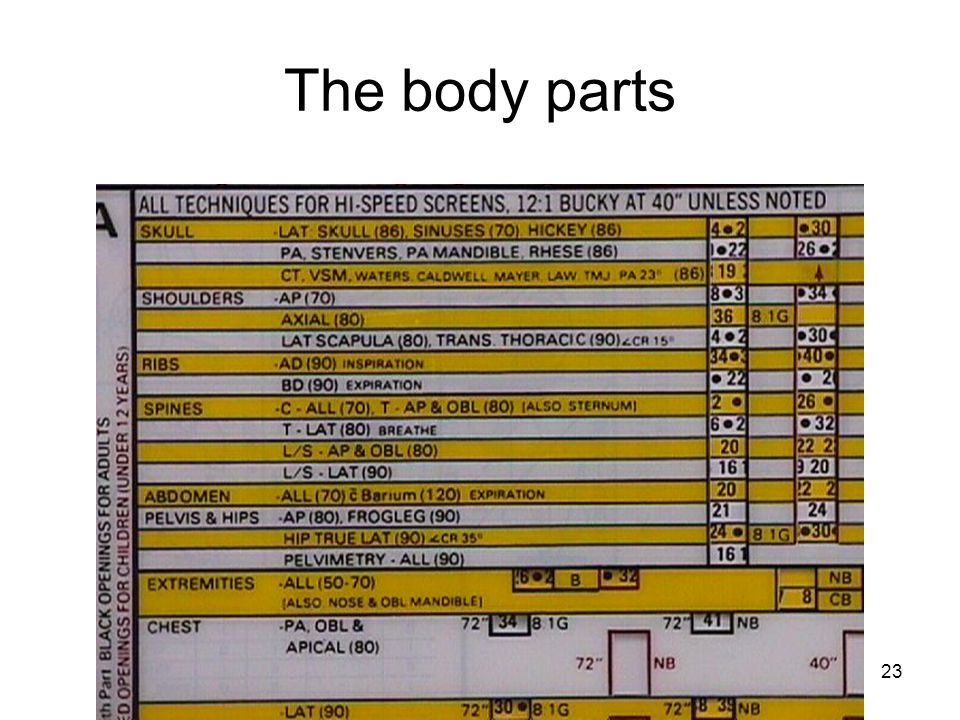 The body parts