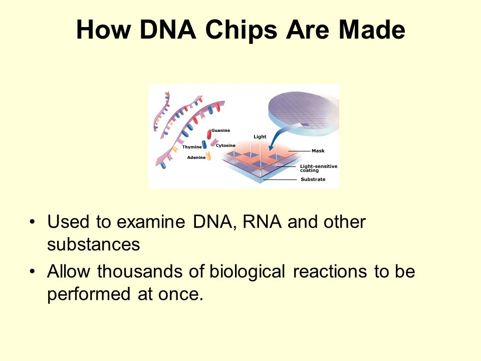 How DNA Chips Are Made Used to examine DNA, RNA and other substances