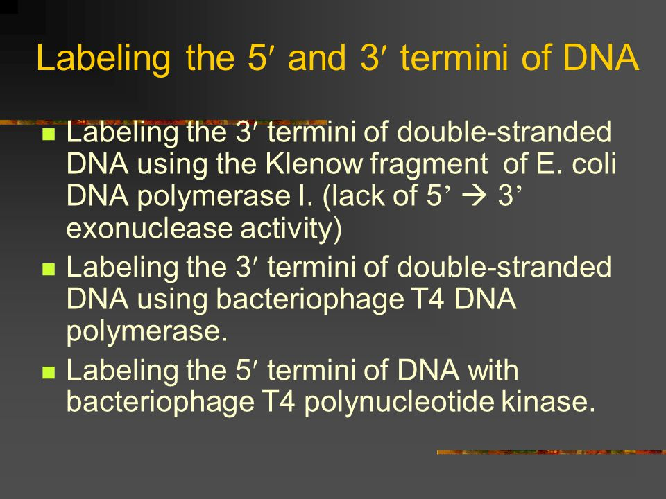 Labeling the 5 and 3 termini of DNA