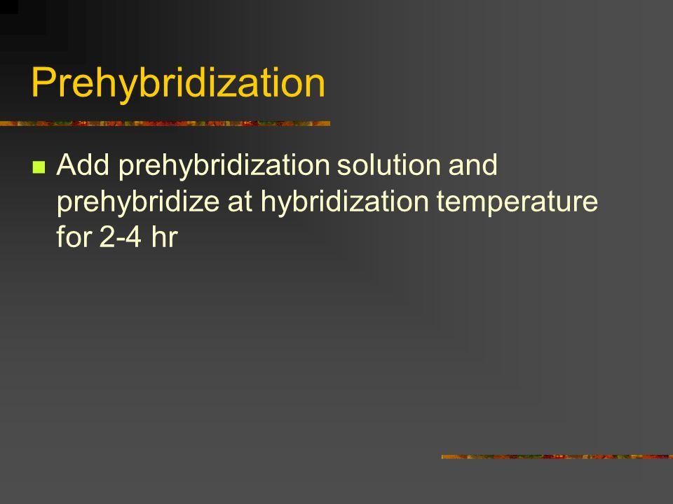 Prehybridization Add prehybridization solution and prehybridize at hybridization temperature for 2-4 hr.